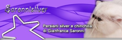 banner saronnisilver 02
